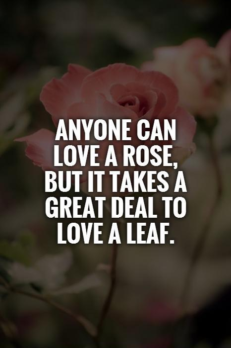 Anyone can love a rose, but it takes a great deal to love a leaf Picture Quote #1