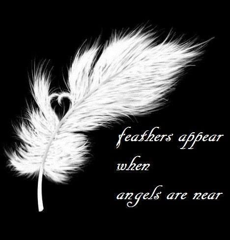 Feathers appear when angels are near Picture Quote #1