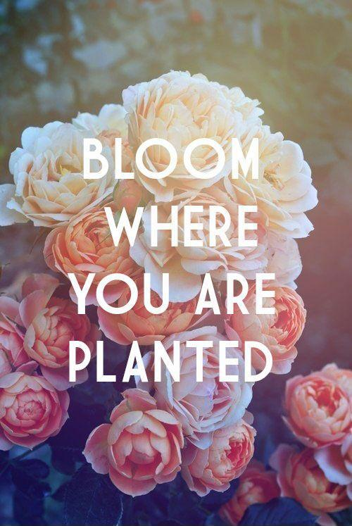 Bloom Quotes Simple Bloom Where You Are Planted  Picture Quotes