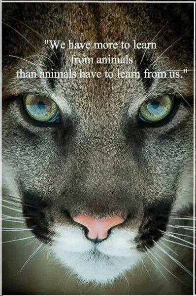 We have more to learn from animals than animals have to learn from us Picture Quote #1