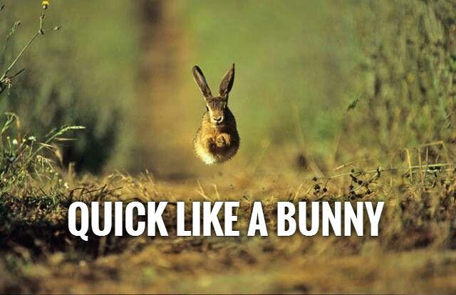 Quick like a bunny | Picture Quotes