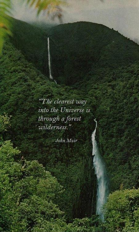 The clearest way into the Universe if through a forest wilderness Picture Quote #1