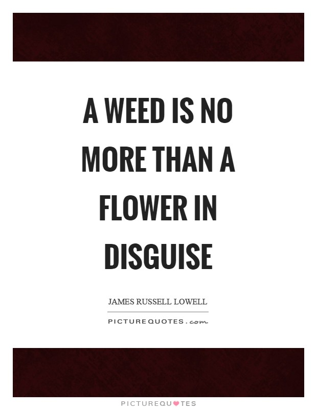 A weed is no more than a flower in disguise Picture Quote #1