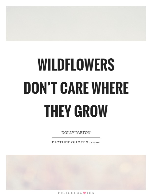 Wildflowers don't care where they grow Picture Quote #1