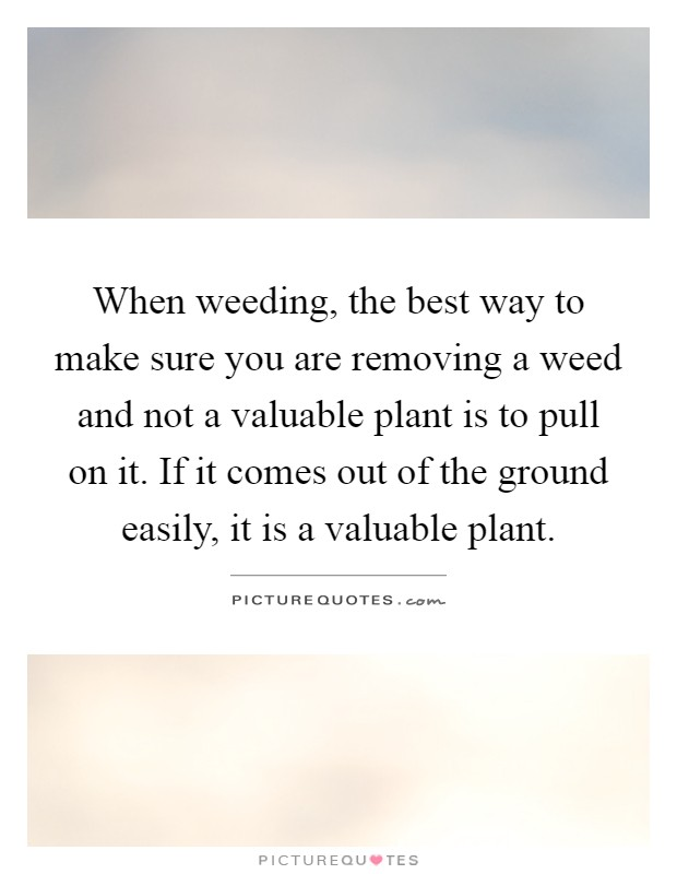 When weeding, the best way to make sure you are removing a weed and not a valuable plant is to pull on it. If it comes out of the ground easily, it is a valuable plant Picture Quote #1