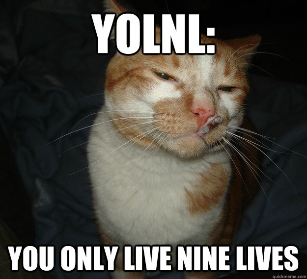 YOLNL: You only live nine lives Picture Quote #1