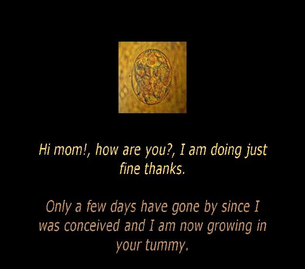Unborn Baby Quote For Mommies 1 Picture Quote #1