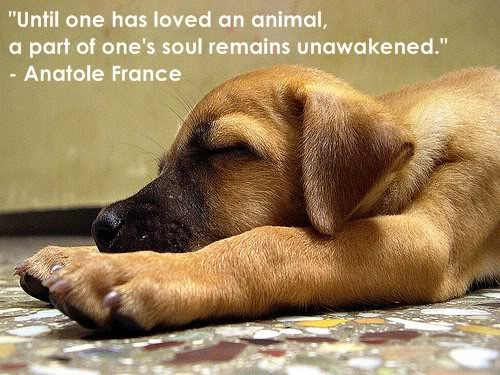 Being An Animal Lover Quote 1 Picture Quote #1