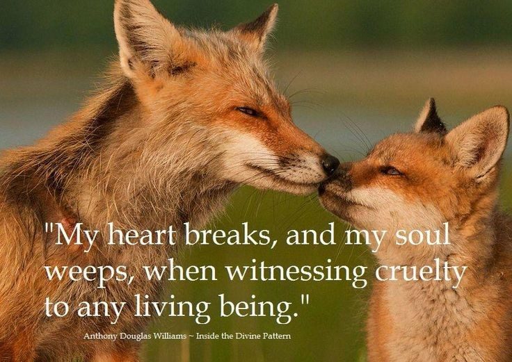 Animal Lover Quote 2 Picture Quote #1