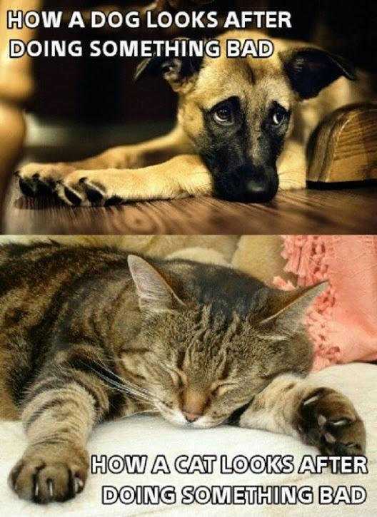 How a dog looks after doing something bad. How a cat looks after doing something bad Picture Quote #1