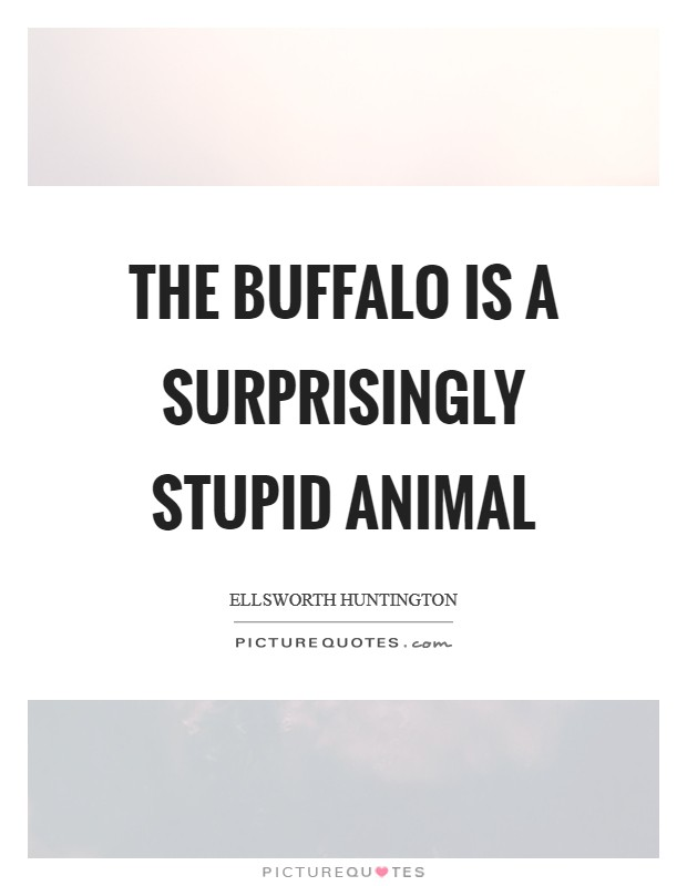 The buffalo is a surprisingly stupid animal Picture Quote #1