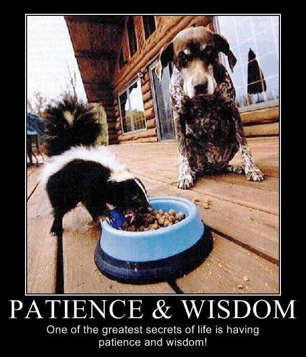 Patience and wisdom. One of the greatest secrets of life ...