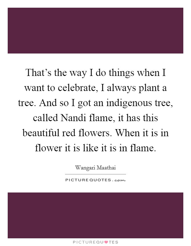 That's the way I do things when I want to celebrate, I always plant a tree. And so I got an indigenous tree, called Nandi flame, it has this beautiful red flowers. When it is in flower it is like it is in flame Picture Quote #1