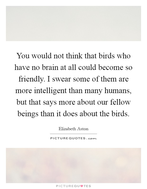 You would not think that birds who have no brain at all could become so friendly. I swear some of them are more intelligent than many humans, but that says more about our fellow beings than it does about the birds Picture Quote #1
