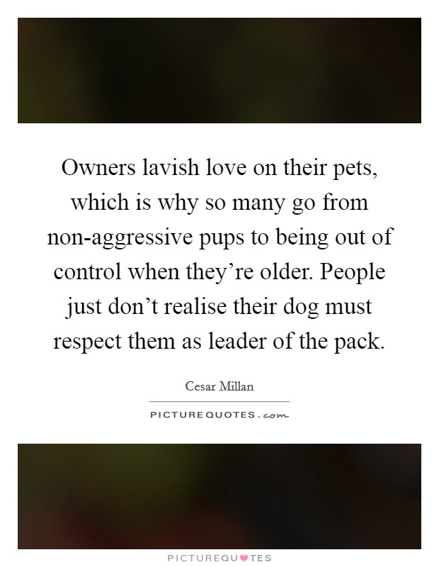 Owners lavish love on their pets, which is why so many go from non-aggressive pups to being out of control when they're older. People just don't realise their dog must respect them as leader of the pack Picture Quote #1