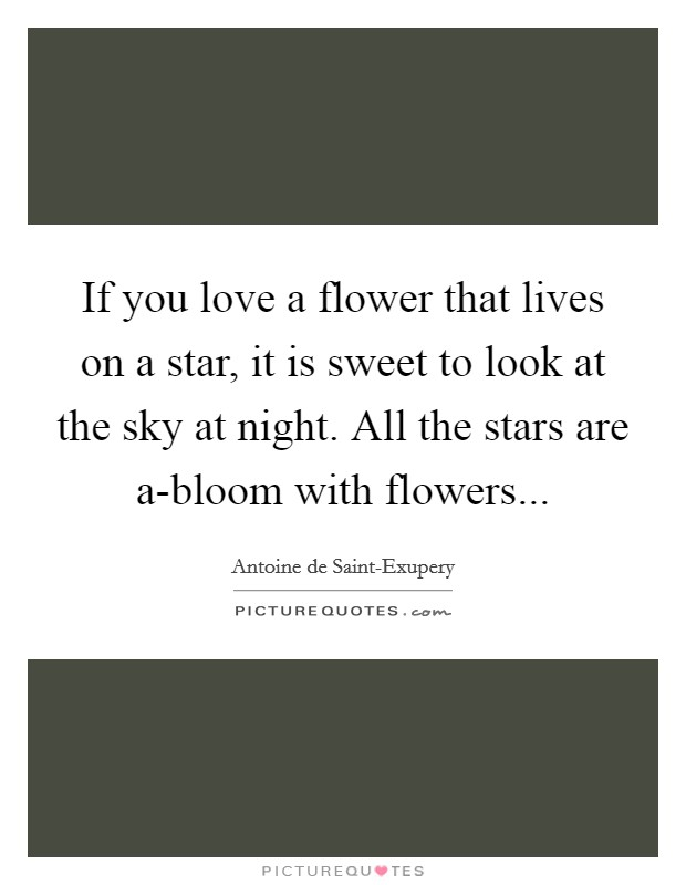 If you love a flower that lives on a star, it is sweet to look at the sky at night. All the stars are a-bloom with flowers Picture Quote #1