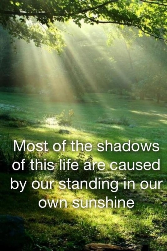 Sunlight Quote 4 Picture Quote #1