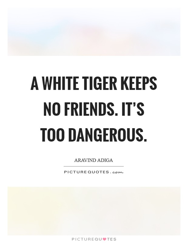 A White Tiger keeps no friends. It's too dangerous Picture Quote #1