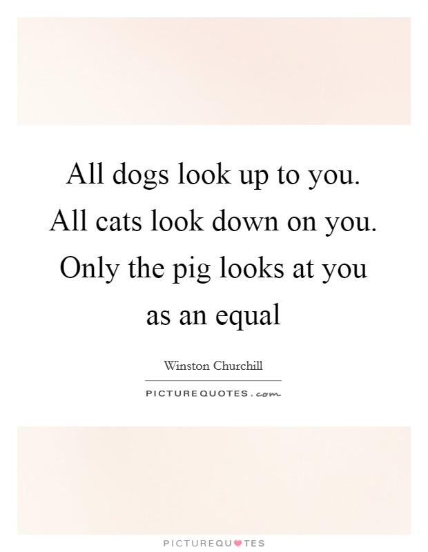 All dogs look up to you. All cats look down on you. Only the pig looks at you as an equal Picture Quote #1