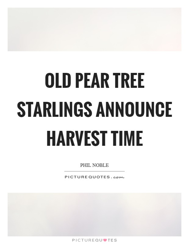 Old pear tree starlings announce harvest time Picture Quote #1