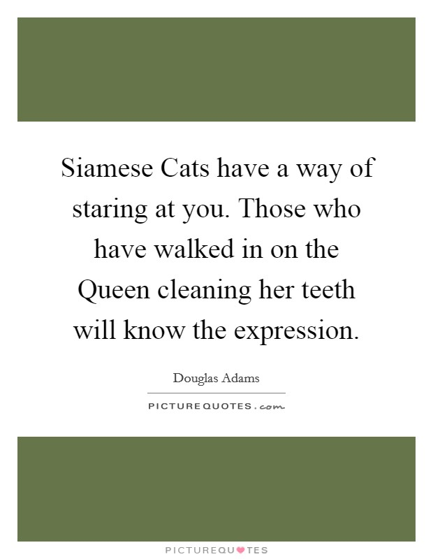 Siamese Cats have a way of staring at you. Those who have walked in on the Queen cleaning her teeth will know the expression Picture Quote #1