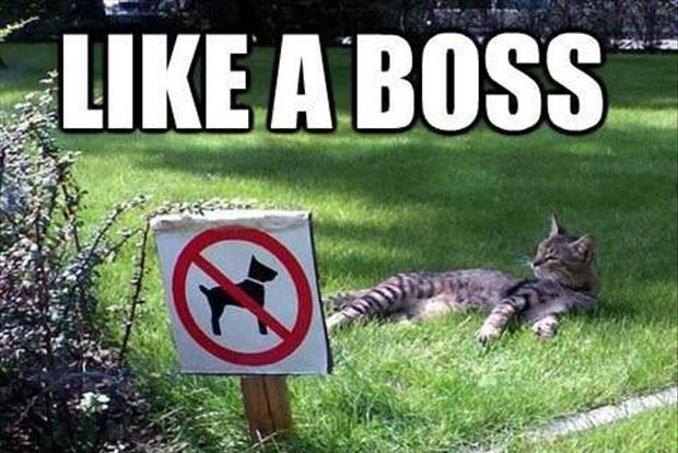 Like a boss Picture Quote #4