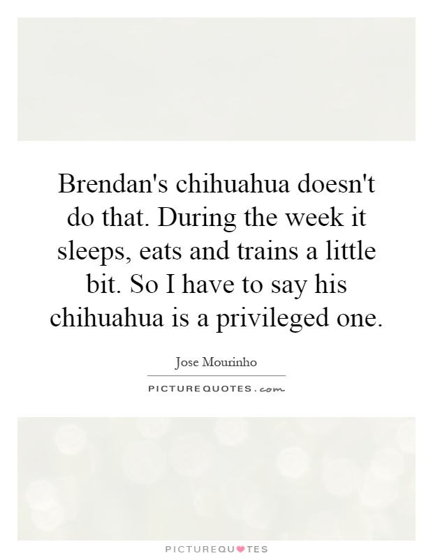 Brendan's chihuahua doesn't do that. During the week it sleeps, eats and trains a little bit. So I have to say his chihuahua is a privileged one Picture Quote #1