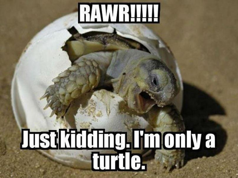 Rawr!!!!! Just kidding. I'm only a turtle Picture Quote #1