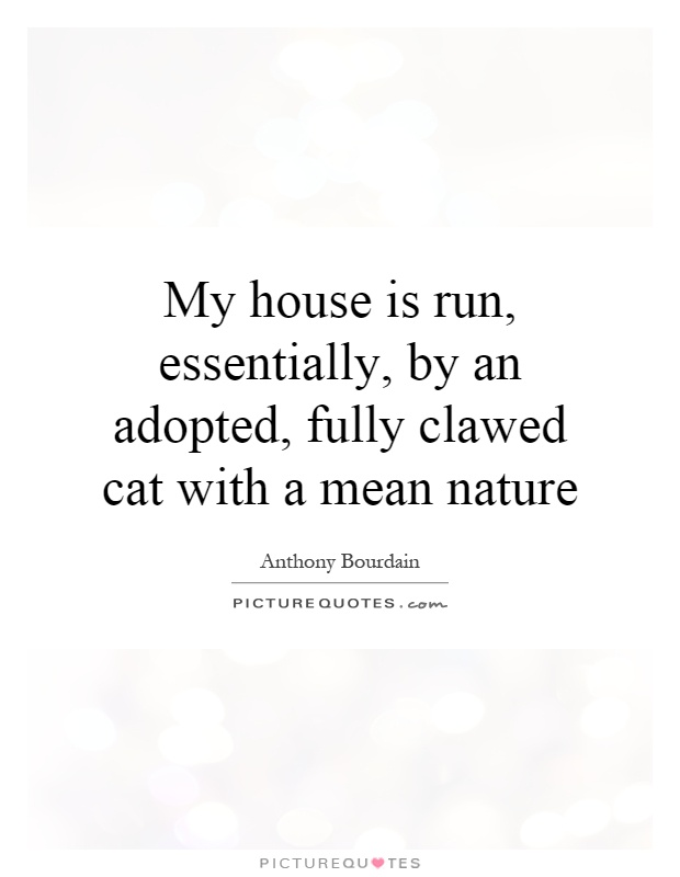 My house is run, essentially, by an adopted, fully clawed cat with a mean nature Picture Quote #1