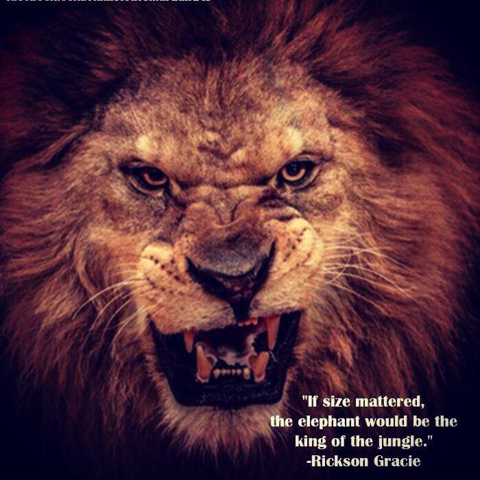 If size mattered, the elephant would be king of the jungle Picture Quote #1