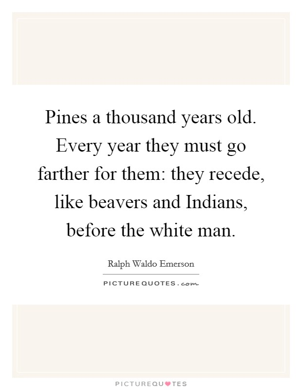 Pines a thousand years old. Every year they must go farther for them: they recede, like beavers and Indians, before the white man Picture Quote #1