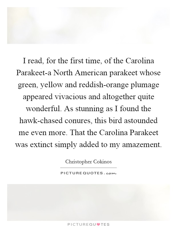 I read, for the first time, of the Carolina Parakeet-a North American parakeet whose green, yellow and reddish-orange plumage appeared vivacious and altogether quite wonderful. As stunning as I found the hawk-chased conures, this bird astounded me even more. That the Carolina Parakeet was extinct simply added to my amazement Picture Quote #1