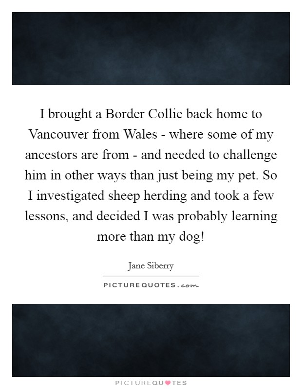 I brought a Border Collie back home to Vancouver from Wales - where some of my ancestors are from - and needed to challenge him in other ways than just being my pet. So I investigated sheep herding and took a few lessons, and decided I was probably learning more than my dog! Picture Quote #1