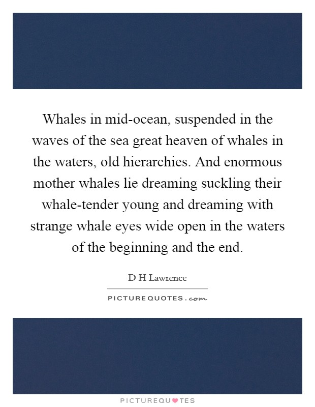 Whales in mid-ocean, suspended in the waves of the sea great heaven of whales in the waters, old hierarchies. And enormous mother whales lie dreaming suckling their whale-tender young and dreaming with strange whale eyes wide open in the waters of the beginning and the end Picture Quote #1