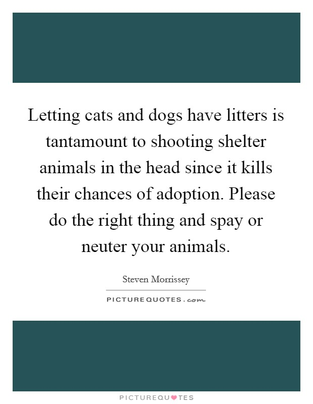 Letting cats and dogs have litters is tantamount to shooting shelter animals in the head since it kills their chances of adoption. Please do the right thing and spay or neuter your animals Picture Quote #1