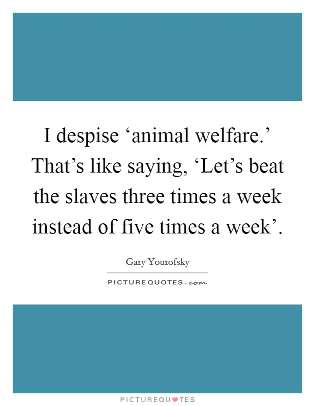I despise 'animal welfare.' That's like saying, 'Let's beat the slaves three times a week instead of five times a week' Picture Quote #1