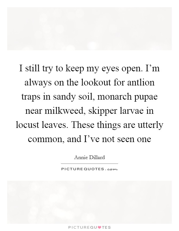 I still try to keep my eyes open. I'm always on the lookout for antlion traps in sandy soil, monarch pupae near milkweed, skipper larvae in locust leaves. These things are utterly common, and I've not seen one Picture Quote #1