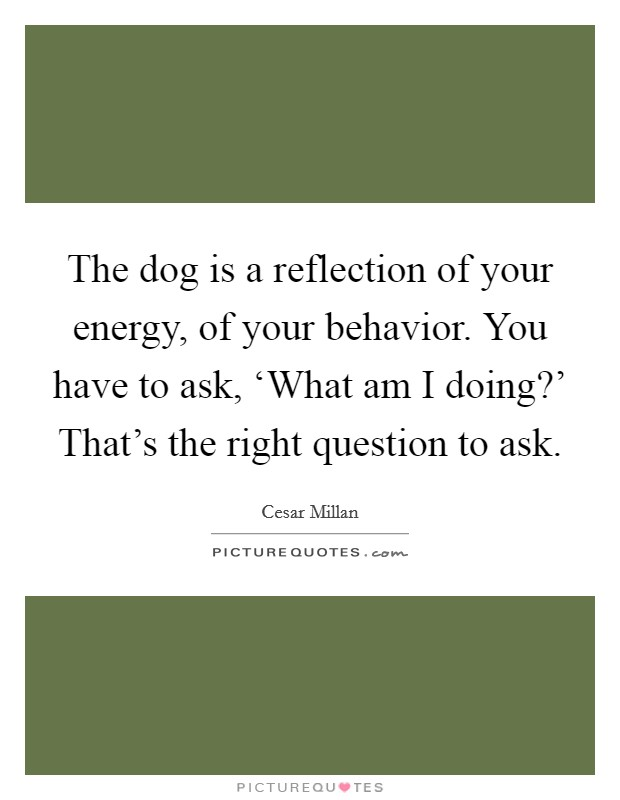 The dog is a reflection of your energy, of your behavior. You have to ask, 'What am I doing?' That's the right question to ask Picture Quote #1