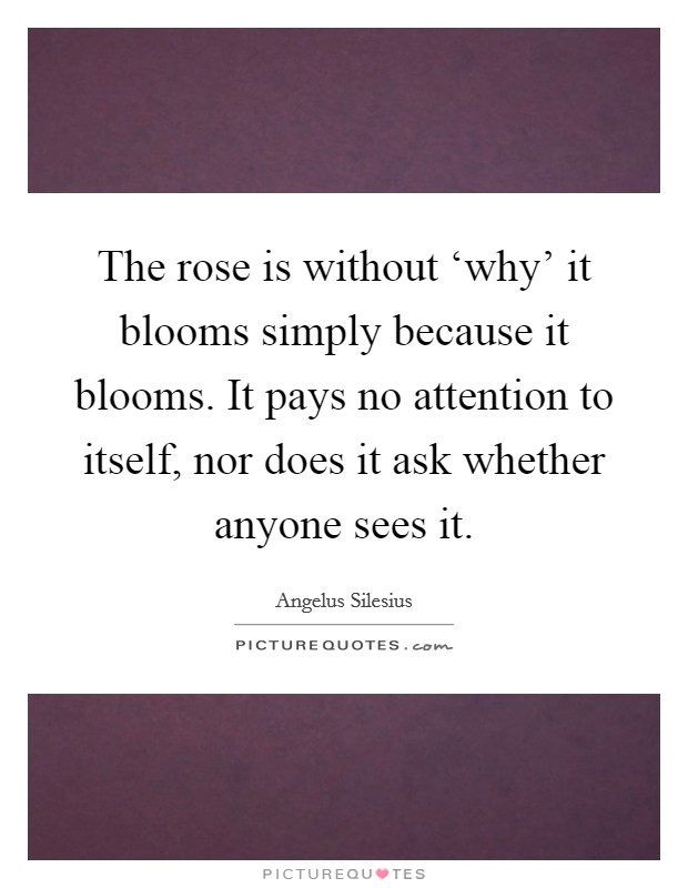 The rose is without 'why' it blooms simply because it blooms. It pays no attention to itself, nor does it ask whether anyone sees it Picture Quote #1