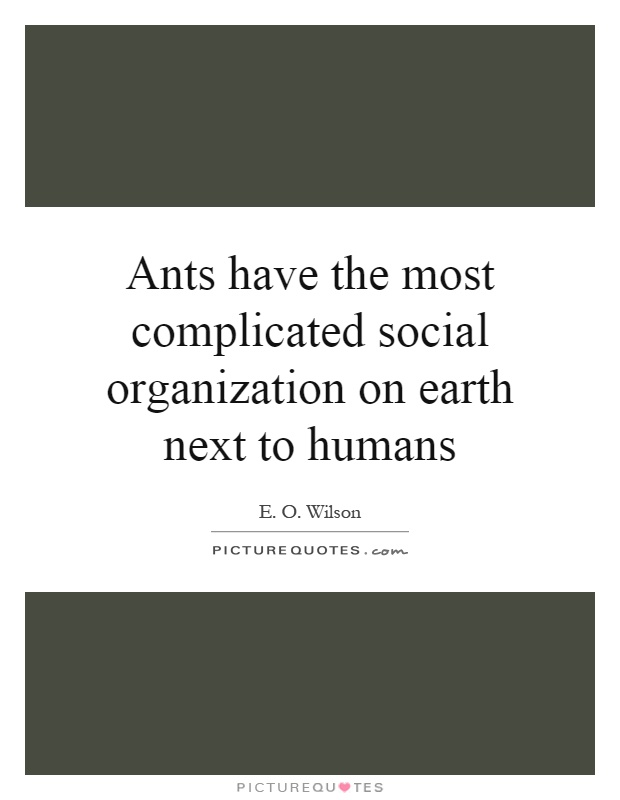 Ants have the most complicated social organization on earth next to humans Picture Quote #1