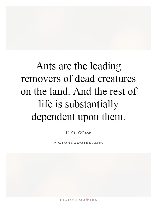 Ants are the leading removers of dead creatures on the land. And the rest of life is substantially dependent upon them Picture Quote #1