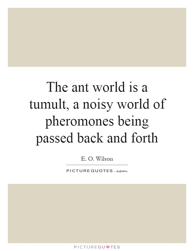 The ant world is a tumult, a noisy world of pheromones being passed back and forth Picture Quote #1