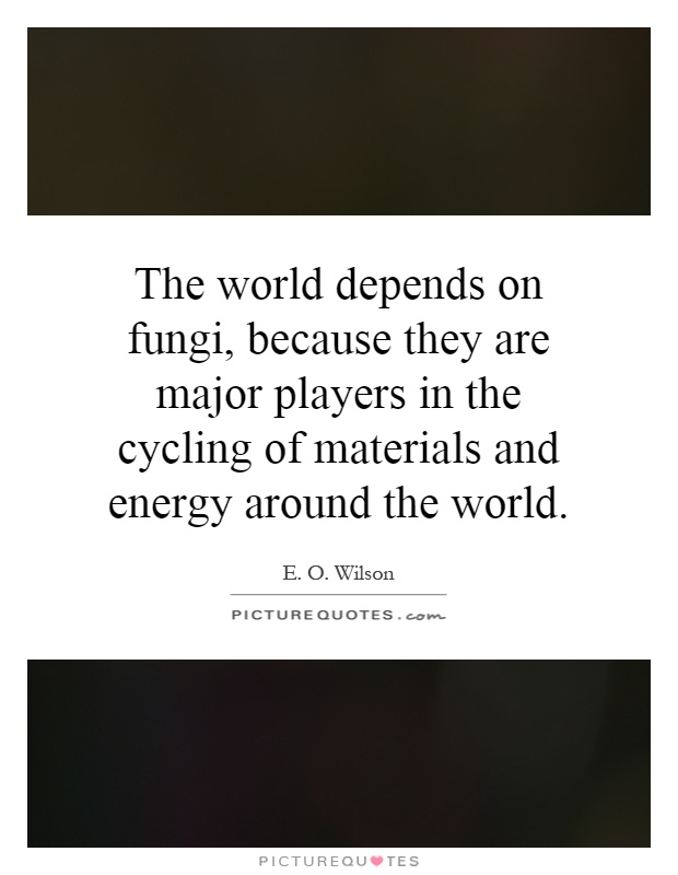 The world depends on fungi, because they are major players in the cycling of materials and energy around the world Picture Quote #1