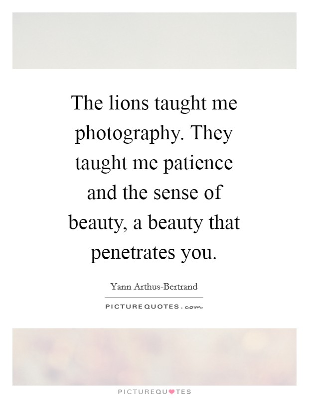 The lions taught me photography. They taught me patience and the sense of beauty, a beauty that penetrates you Picture Quote #1