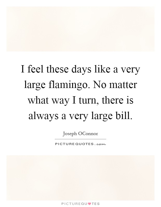 I feel these days like a very large flamingo. No matter what way I turn, there is always a very large bill Picture Quote #1