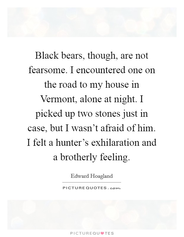 Black bears, though, are not fearsome. I encountered one on the road to my house in Vermont, alone at night. I picked up two stones just in case, but I wasn't afraid of him. I felt a hunter's exhilaration and a brotherly feeling Picture Quote #1