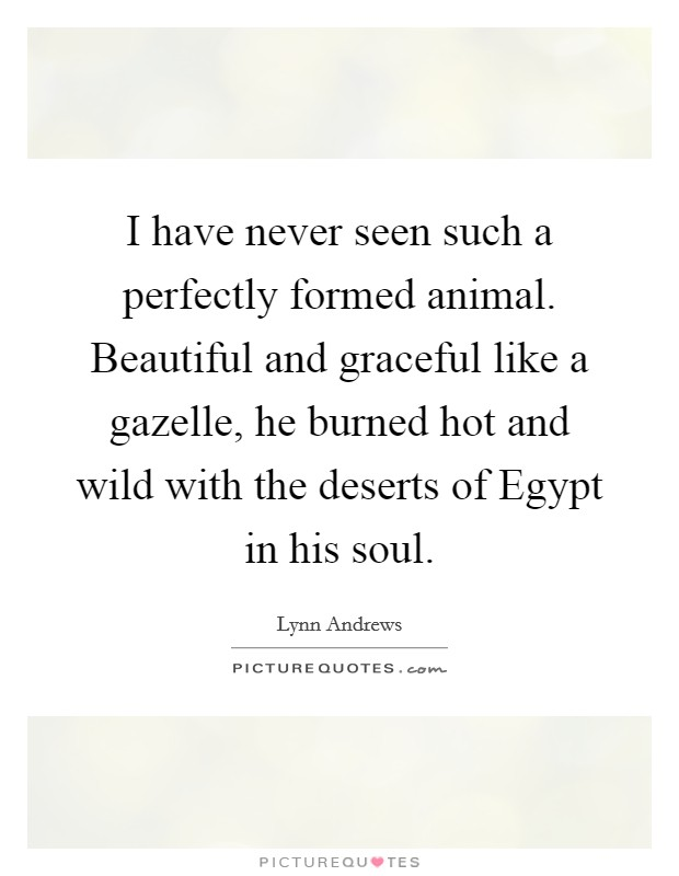 I have never seen such a perfectly formed animal. Beautiful and graceful like a gazelle, he burned hot and wild with the deserts of Egypt in his soul Picture Quote #1