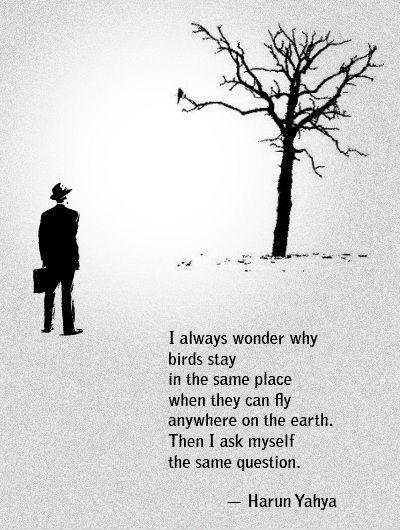 I always wonder why birds stay in the same place when they can fly anywhere on the Earth. Then I ask myself the same question Picture Quote #1