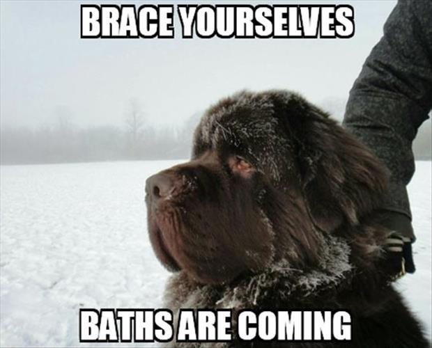 Brace yourselves, baths are coming Picture Quote #1
