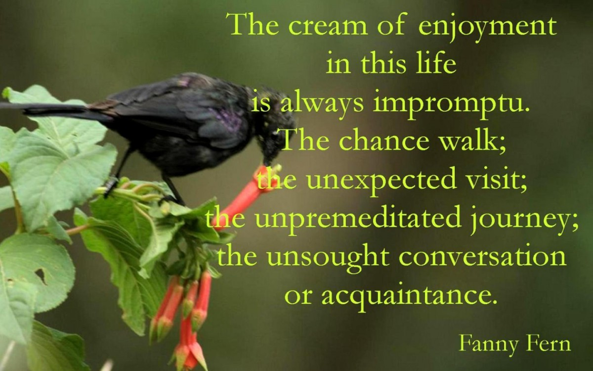 Enjoyment Quote 1 Picture Quote #1